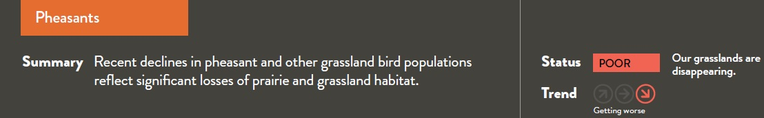 Recent declines in pheasant and other grassland bird populations reflect significant losses of prairie and grassland habitat.